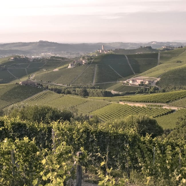 Produttori del Barbaresco, Piedmont