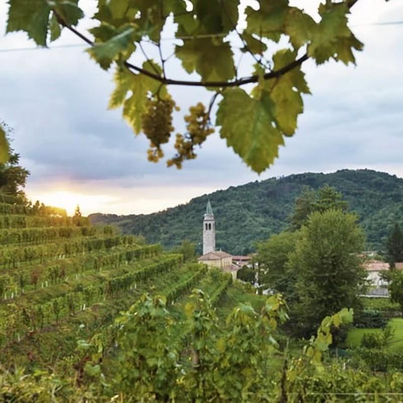 La Roncaia, Friuli Colli Orientali